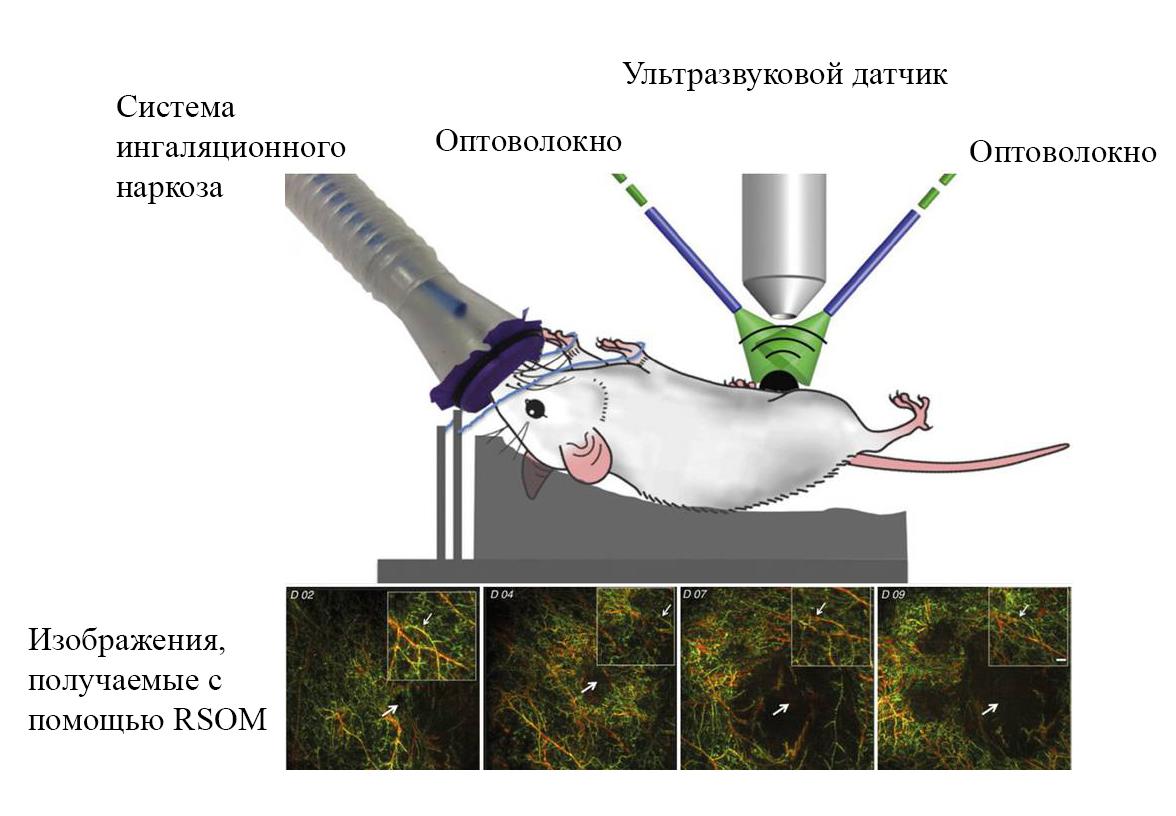Схематическое изображение доклинической системы  RSOM